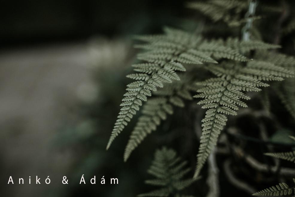 Anikó & Ádám